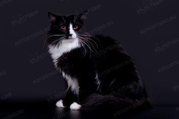 Dustin. <p>Норвежский лесной кот</p>