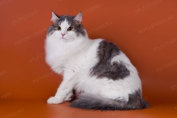Василий. <p>Домашний кот</p>