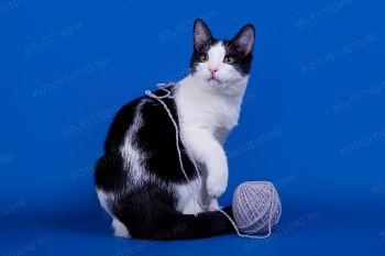 Домашний котик Филимон