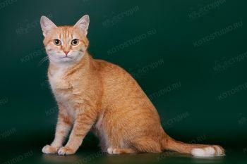 Анфиса Чехова. <p>Домашняя кошка</p>