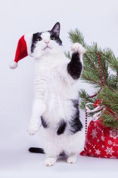 Филимон в костюме Деда Мороза.