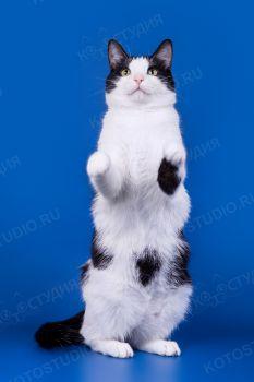 Филимон. <p>Домашний котик</p>