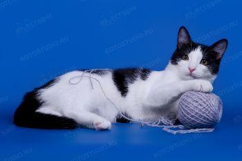 Домашний котик Филимон.