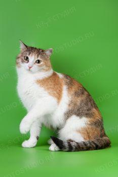 Домашняя кошка Ириска.