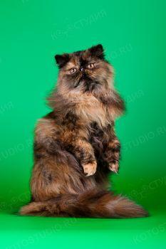 Бонилина Флоранс. <p>Персидская кошечка</p>