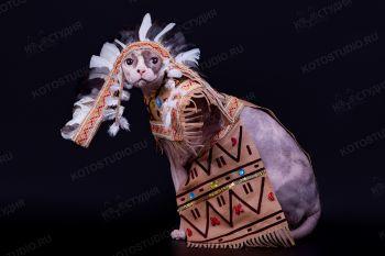 Кошка канадский сфинкс в костюме индейца.