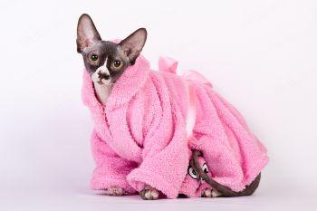 Ви-Арвен Даймонд Золотой Лотос. <p>Кошка породы Канадский сфинкс в домашнем халате</p>