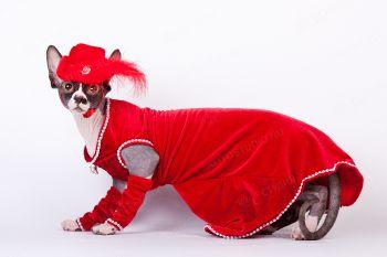 Ви-Арвен Даймонд Золотой Лотос. <p>Кошка породы Канадский сфинкс в красном платье</p>