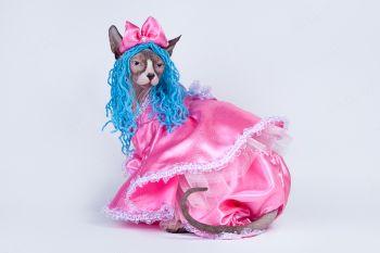 Кошечка породы канадский сфинкс в костюме Мальвины.