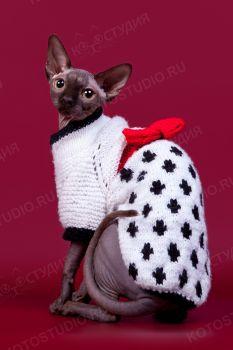 Amelia в модной одежде. <p>Кошка породы Канадский сфинкс</p>