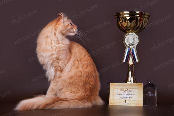 Exclusive Cats Fluffy Gold Nace. <p>Кот породы Американский кёрл</p>
