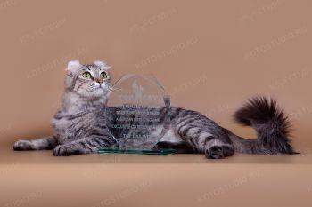 Exclusive Cats Donna Liza. <p>Кошка породы Американский кёрл</p>
