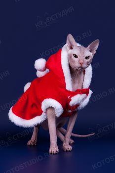 Master Joda SfinksBand. <p>Кот породы Донской сфинкс</p>