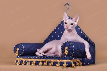 Кошка породы Донской сфинкс.