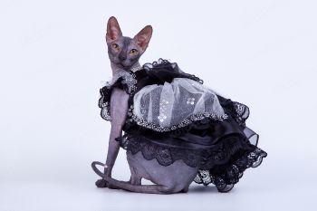 RU Oshishimi Shudan. <p>Кошка породы Донской сфинкс</p>