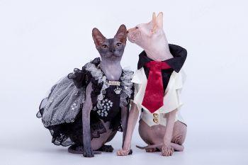 Master Joda SfinksBand и RU Oshishimi Shudan.