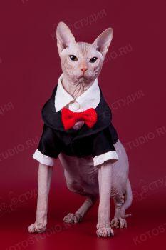 Кот породы Донской сфинкс. <p><span style=