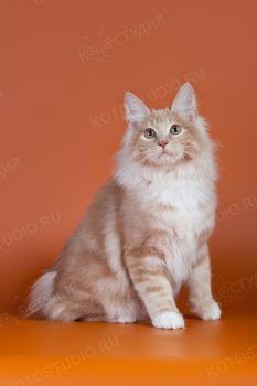 Arletta la Belle Gramd Pompon RU. <p>Кошка породы Курильский бобтейл</p>