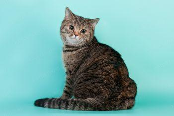 Кошка Зитта со своим котенком.