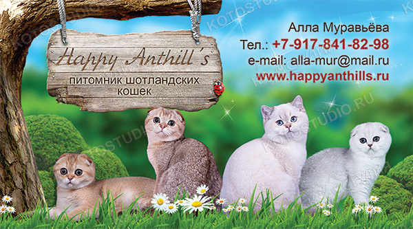 Визитка питомника шотландских кошек Happy Anthill's